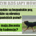 obroncy_bezpanskich_psow_png.png