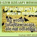 wrony_zawracaja_png.png